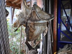 Místní speciality – sušené solené tresky.