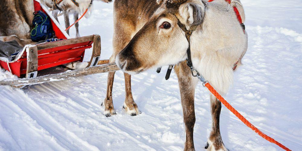 Rovaniemi – výlet za Santa Clausem
